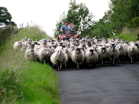 Holmhead Guest House: Rush hour in Greenhead, UK.