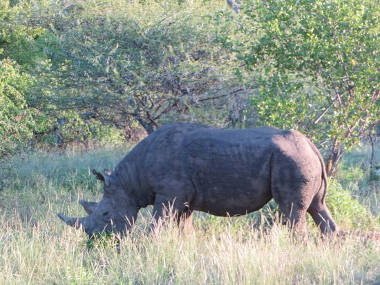 Naledi Game Lodges: rhino