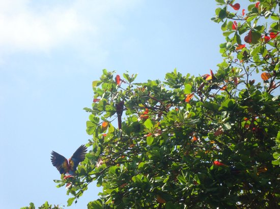 Costanera Bed and Breakfast: wild parrots in front of the room
