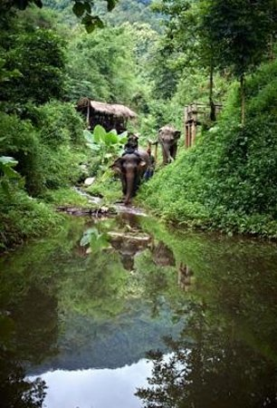 Mekong Elephant Park: The wilderness surrounding the Mekong Elephant Camp