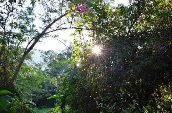 Belle Villa Resort Chiang Mai: backyard scenery