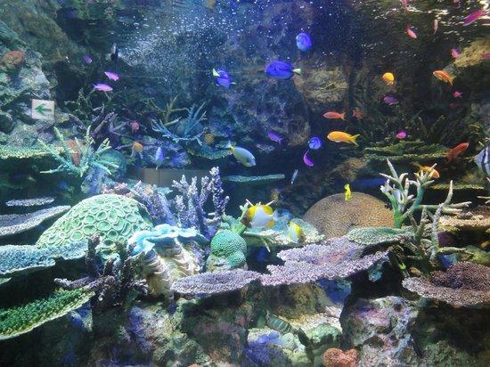 Toshima, Giappone: カラフルな魚が泳ぐ「オーストラリアの海」