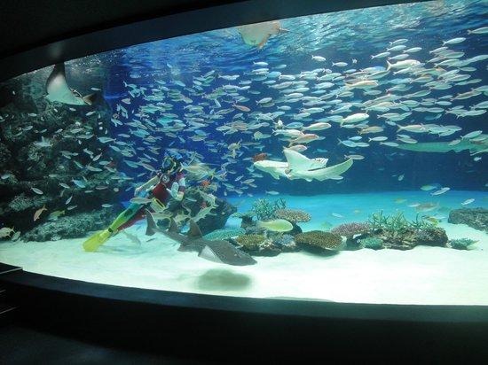 Toshima, Japonya: 3千匹の魚がいる「サンシャインラグーン」