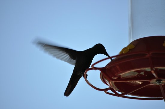 Bella Vista Mar: Lots of hummingbird visitors to entertain as you eat breakfast