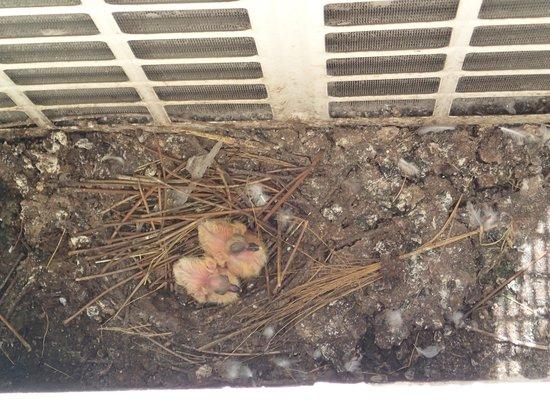 Thai Hotel Krabi: The bird nest under our window.