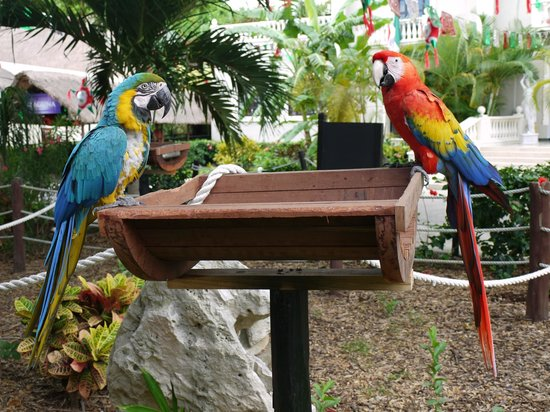 Sandos Caracol Eco Resort: Animals are everywhere