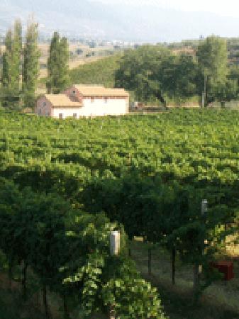 Raina Winery and Vineyard: Il Campo di Colonnello
