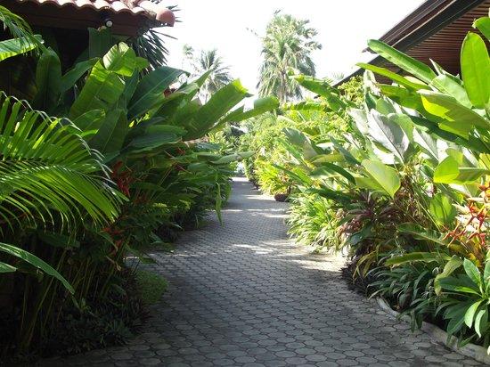 Smile House Resort : villaggio