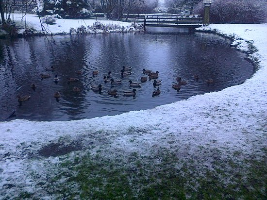 Damson Dene Hotel: Snow and Ducks - great companions