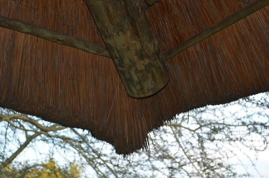 Sefapane Lodge and Safaris: Roof
