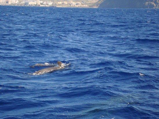 TRYP Tenerife: delfin / valtur