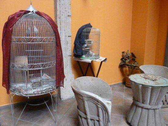 Hotel Morales Historical & Colonial Downtown Core: Pájaros tropicales que te despiertan por la mañana