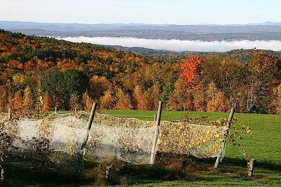 Walpole Mountain View Winery: Beautiful View and netting around grapes to keep birds away