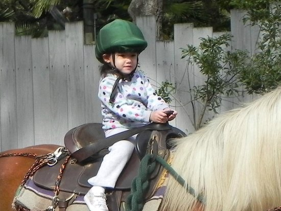 Tampa's Lowry Park Zoo: Grandbaby riding a pony!  She LOVED doing this!