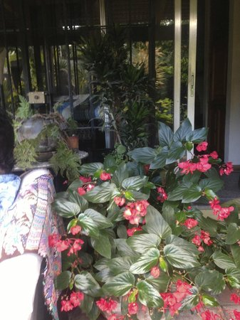 Jenna's River Bed and Breakfast: Lush grounds!