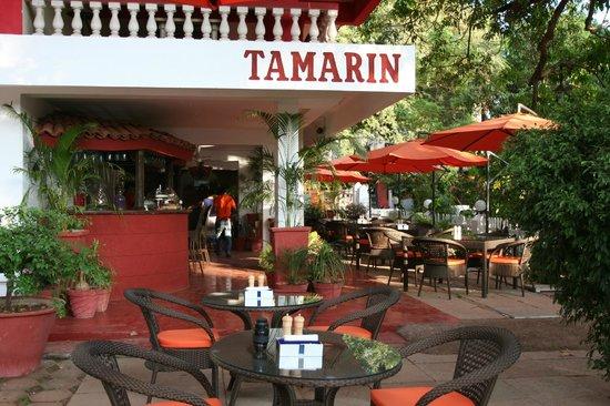 Tamarin