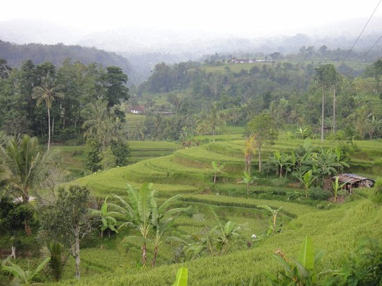 Green view picture of tegalalang rice terrace ubud for Tegalalang rice terrace ubud