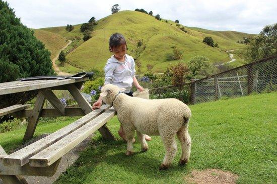 A Kiwi Farmstay: My gal feeding Shaunie