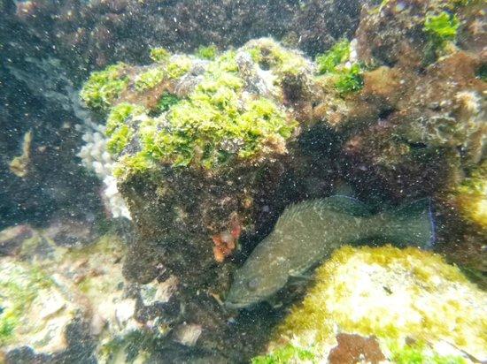 Concha de Perla: Snorkeling