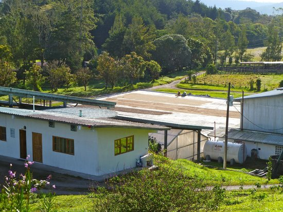 Volcan, Panama: Janson Coffee Processing Plants