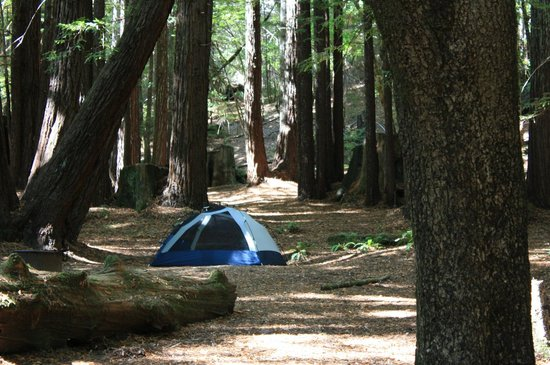 Humboldt Redwoods State Park: Tenting it in Albee Creek campground