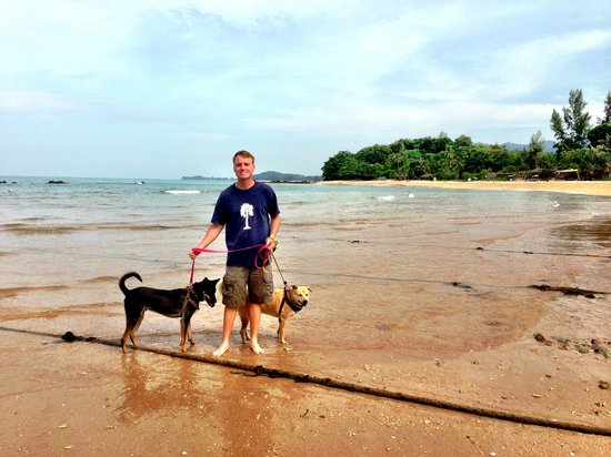 Lanta Animal Welfare: Dog walking on the beach