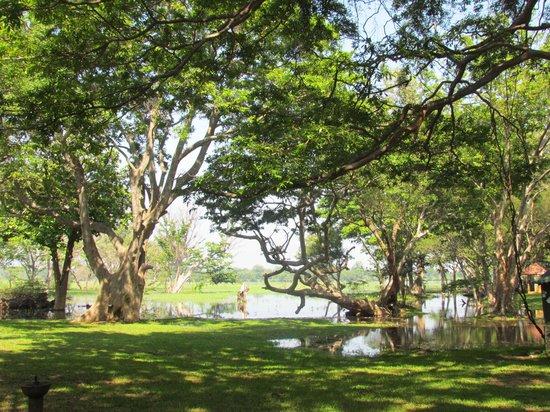 Cinnamon Lodge Habarana: lake view