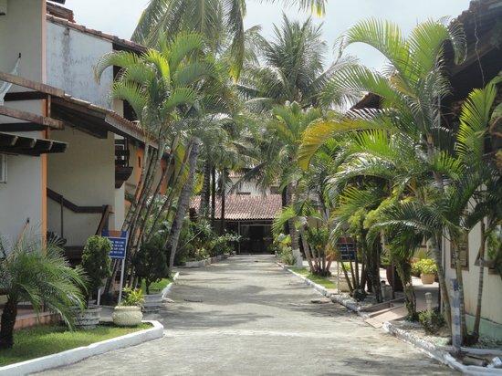 Hotel Fenix: Muitos coqueiros.