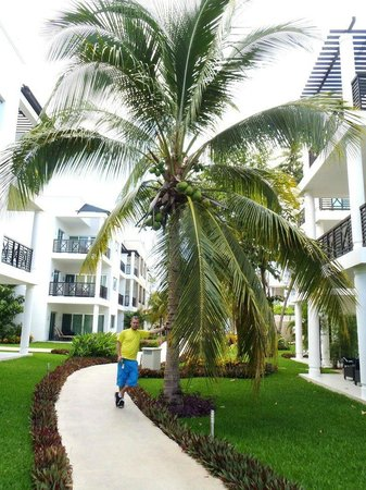 Azul Fives Hotel By Karisma: Beautiful Palm trees!