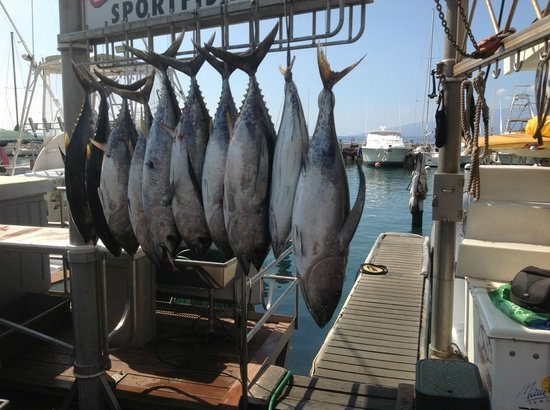 Some of the tuna hanging picture of start me up sport for Start me up fishing
