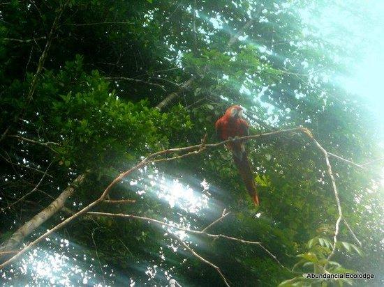 Abundancia Amazon Eco Lodge: The amazing birds are everywhere