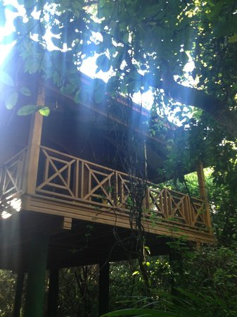 Hamanasi Adventure and Dive Resort: Treehouse Exterior