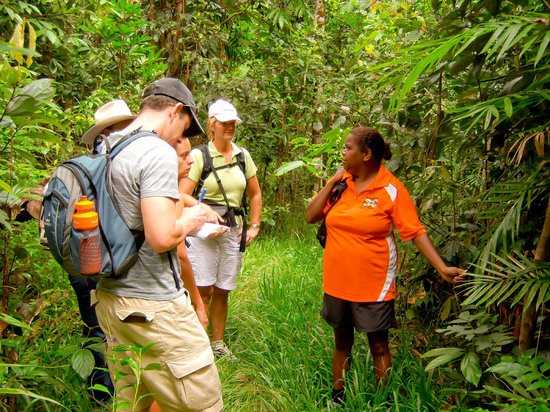 Ingan Tours- Day Tours: Spirit of the Rainforest Tour - See the rainforest environment through Aboriginal eyes