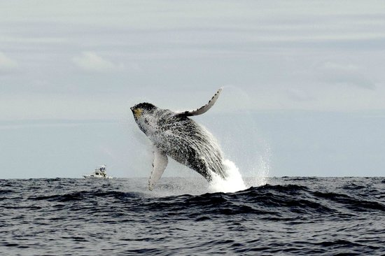 Whale Watch Cabo: What a sight!
