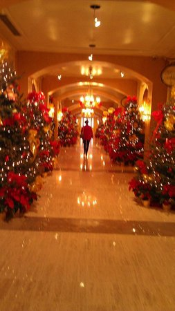 Royal Sonesta New Orleans: Hall of teddy bear trees