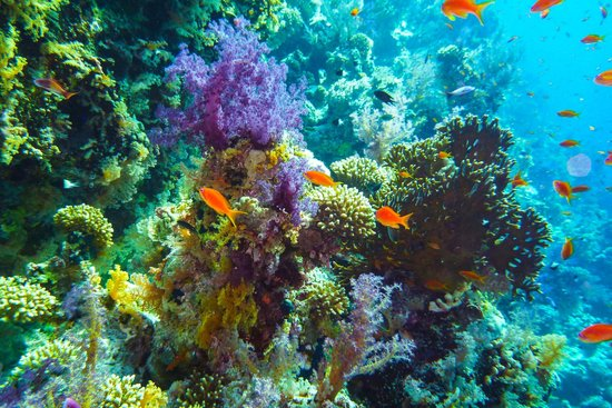 Four Seasons Resort Sharm El Sheikh: diving jackson reef