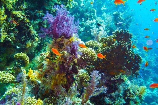 Four Seasons Resort Sharm El Sheikh: diving jackson reef