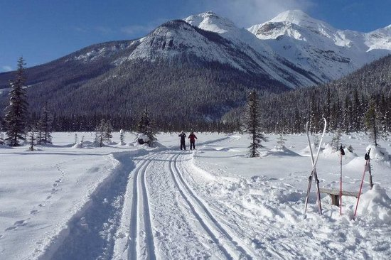 Goleen, Canadá: Cross Country Skiing at Emerald Lake - Yoho National Park