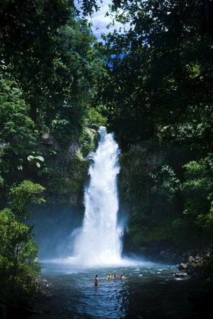 Taveuni Island Resort & Spa: World Heritage Park