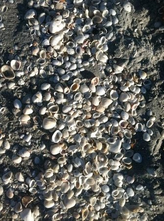 Tween Waters Inn Island Resort & Spa: beautiful beach to find shells