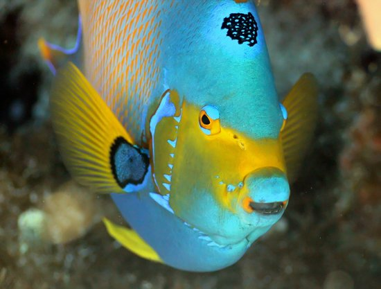 Bottom Time Divers: Common Resident on the Reefs