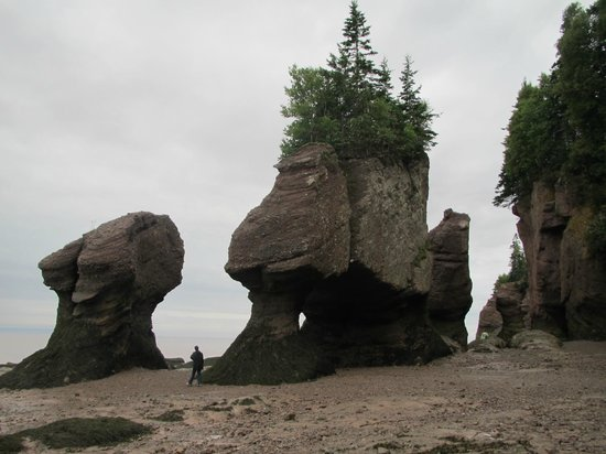 Innisfree Bed and Breakfast: Hopewell Rocks at low tide