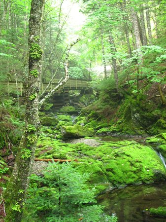 Innisfree Bed and Breakfast: Dickson Falls, Fundy NP