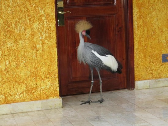 Iberostar Quetzal Playacar: '