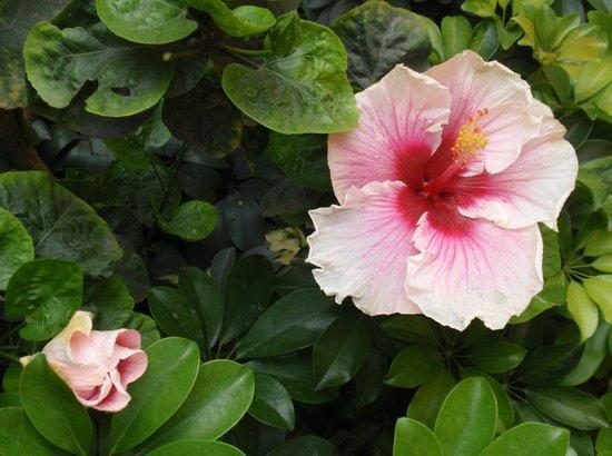 Hotel San Antonio Abad: Gardens