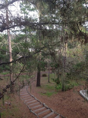 Cambria Pines Lodge: steep downhill path to town of Cambria