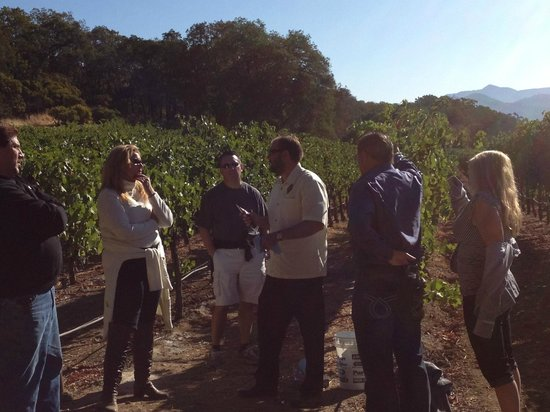 Francis Ford Coppola Winery: tour of the vineyard