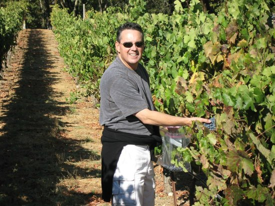Francis Ford Coppola Winery: Touring the vineyard