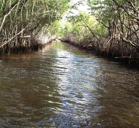 Everglades City Airboat Tours : Mangroves