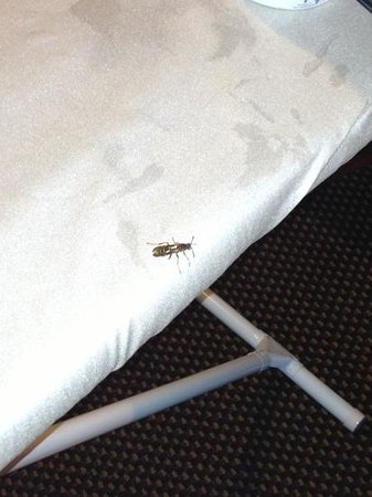 Candlewood Suites Temple: same roach. yuck.